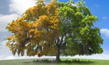 профилактика и лечение деревьев от короеда